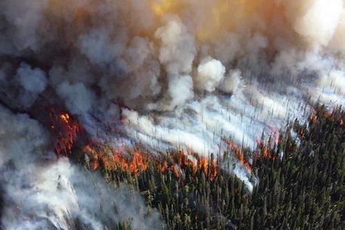 Площадь лесных пожаров в Сибири сокращается